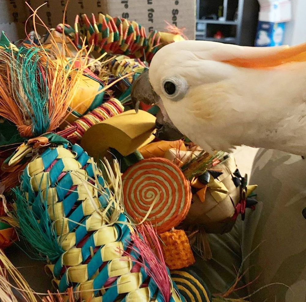 Why Bird Toys are Important