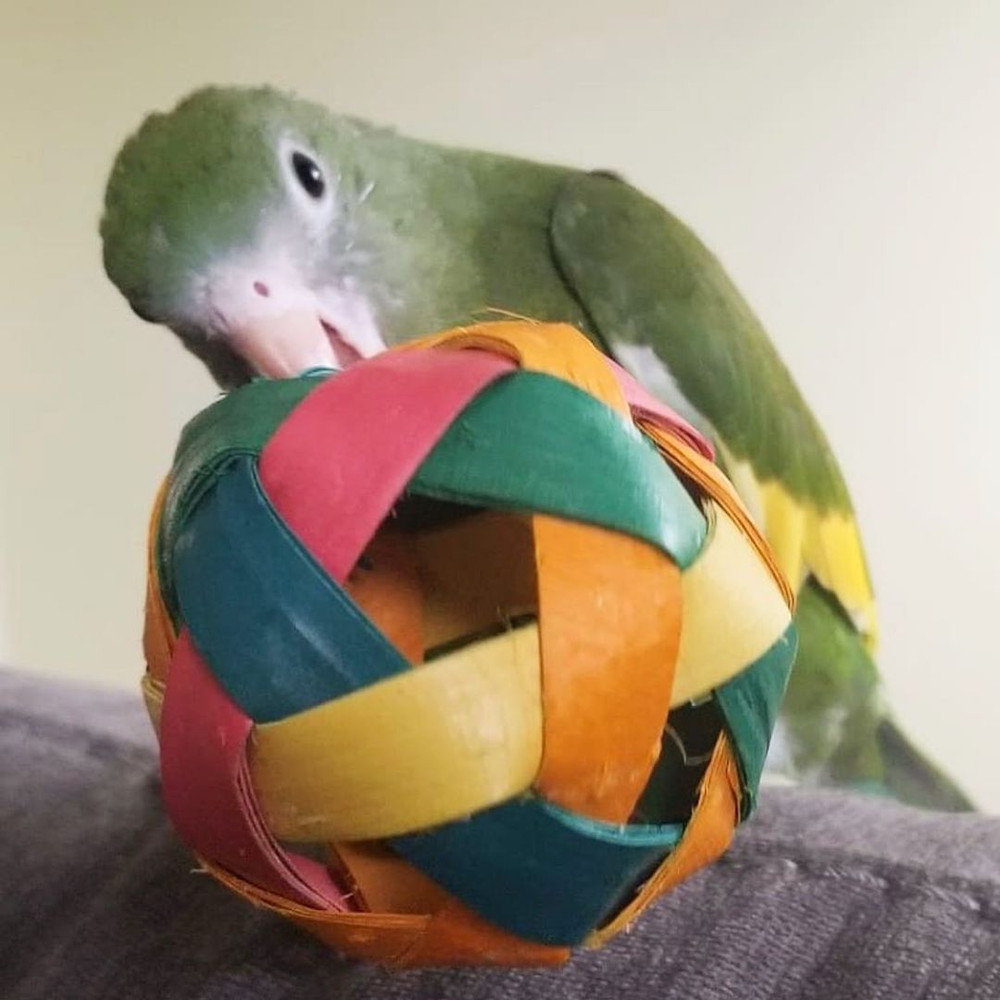 Ziggy and his Planet Pleasures Foot Toy