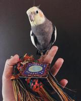 Ozzy the cockatiel enjoying Planet Pleasures' Caterpillar Bird Toy