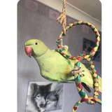 """Peepo hanging on his colorful and all natural """"Four Ring Chain"""" parrot toy."""