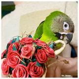 Kai enjoying his Planet Pleasures Rose Bouquet Chew Toy