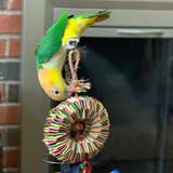Luci the Caique Loving her Bird Tire with Star Foraging Bird Toy
