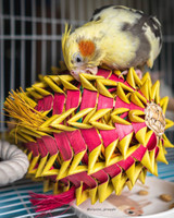 Roger and his Pineapple Foraging Parrot Toy