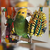 5 Best Parrot Foraging Toys