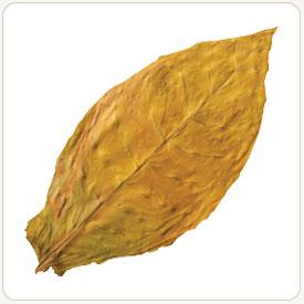 Agonya tobacco leaf example