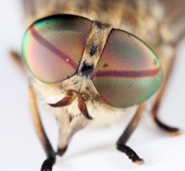 10thdan-reading-master-the-fly (54K)