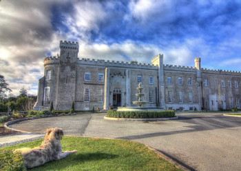 Bellingham Irish Castle with Ri the Irish wolfhound looking on!!