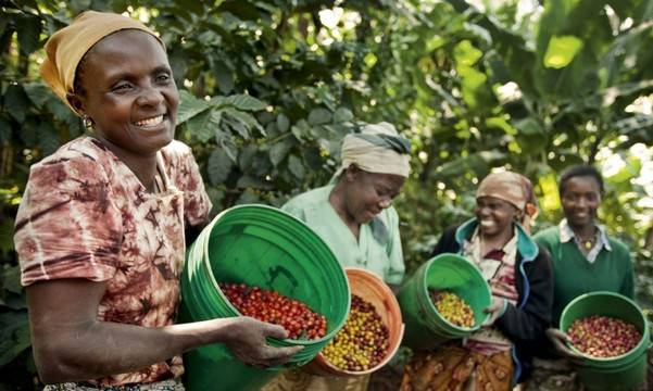 Introducing Ethiopia Konga Natural LTD