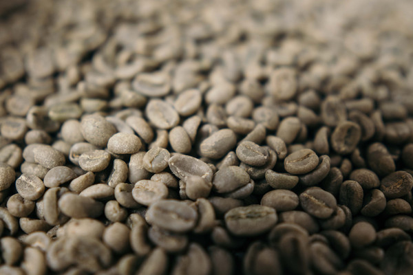 Now Offering Green Coffee Beans Online!