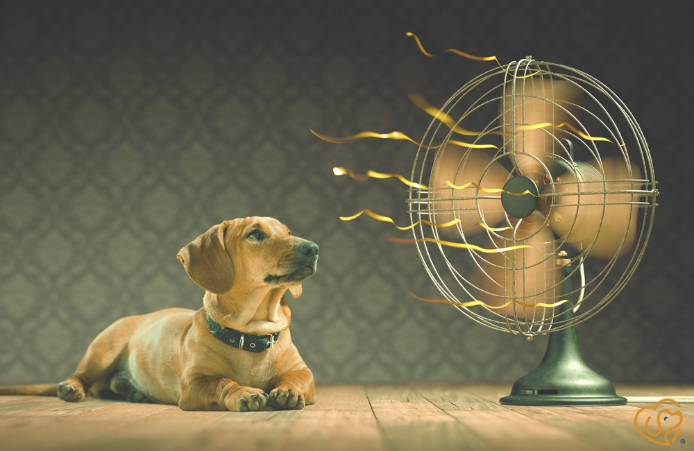Heat Exhaustion:  Identifying Signs and What to Do