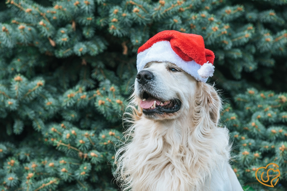 Fun Holiday Events With Fido