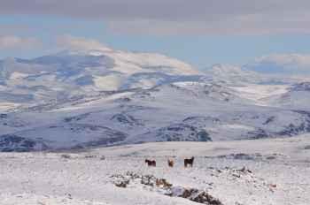 Snowy Landscape - #413