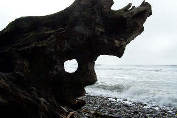 Face in Driftwood - #197