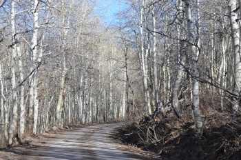 Aspen Lane - #462