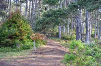Quiet Path - #330
