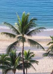 Hawaiian Palm - #21