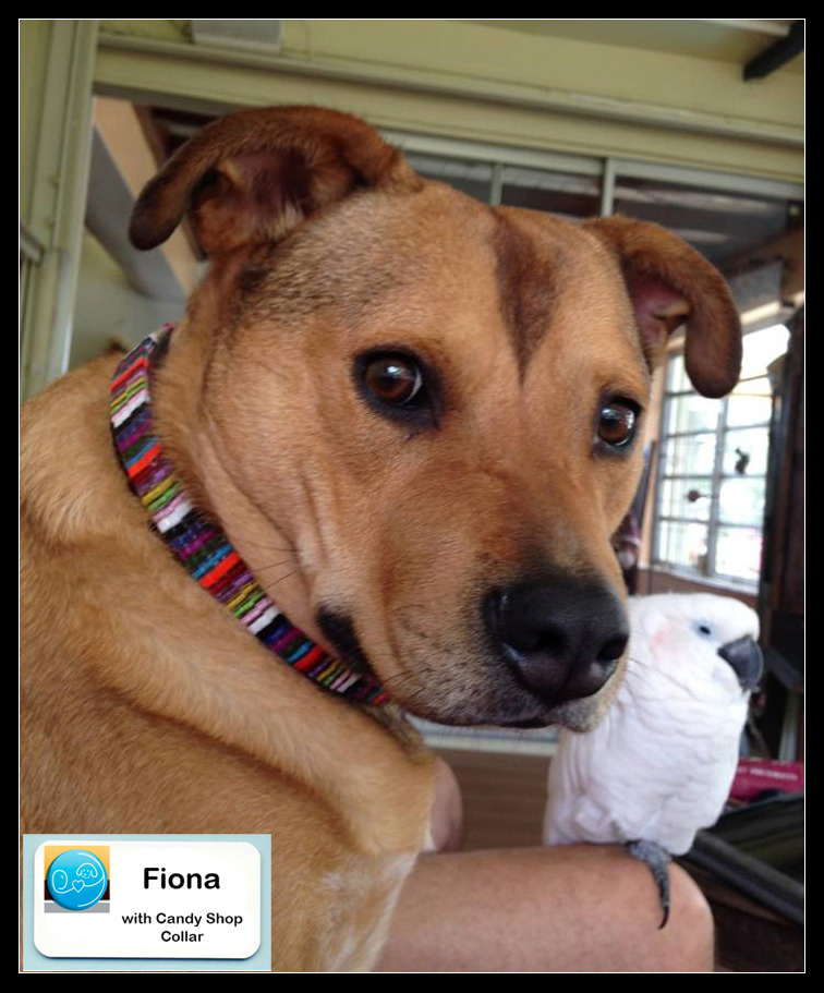 fiona with collar