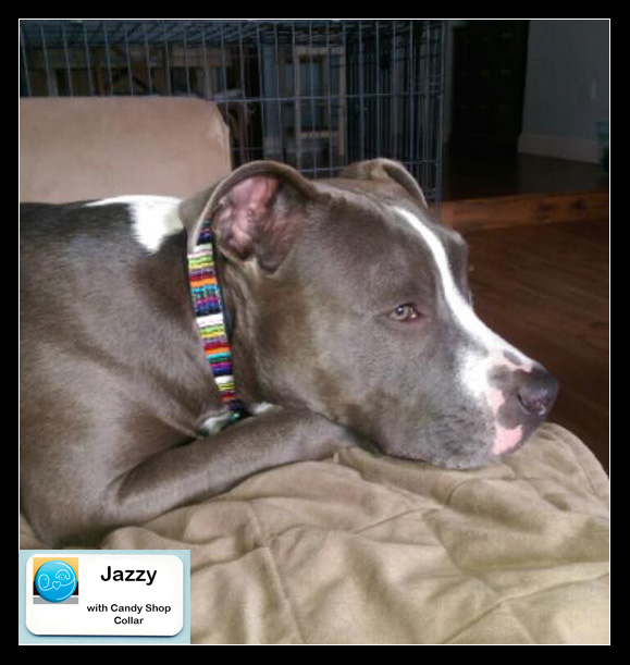 Jazzy with collar