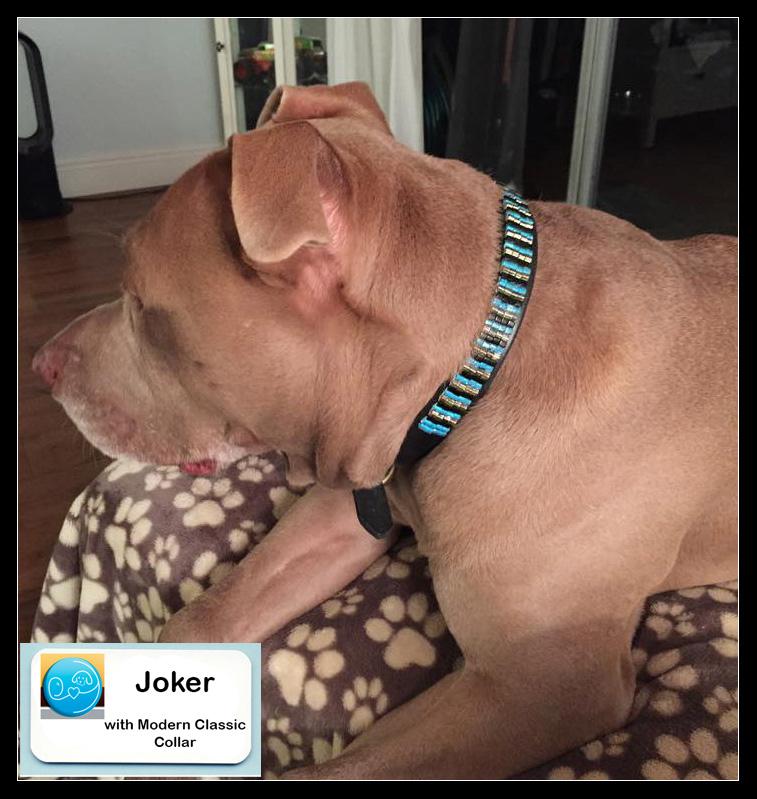 Joker with collar