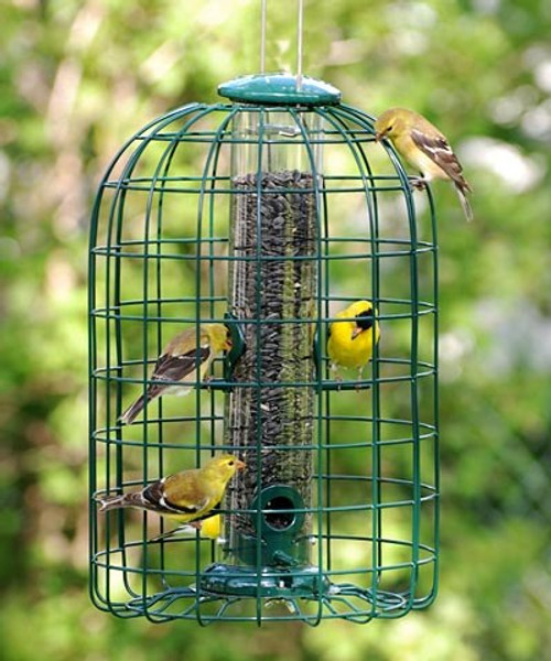 Audubon Squirrel-Proof Caged Seed Feeder