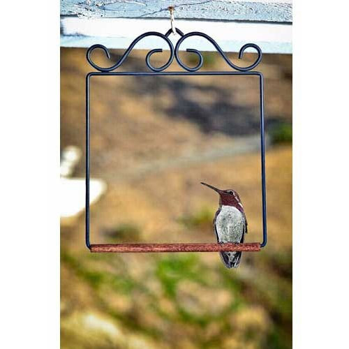 Hummingbird Swing, Black