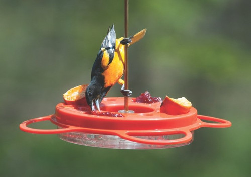 12 Oz. Oriolefest Bird Feeder