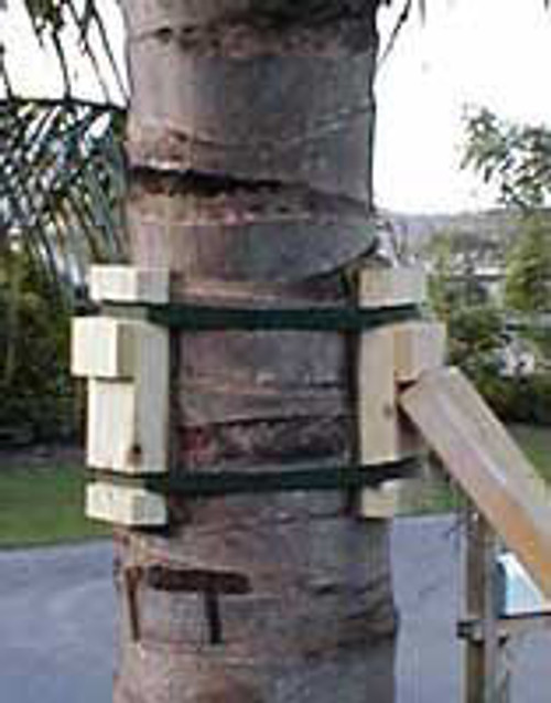 TreeHelp Palm Tree Brace