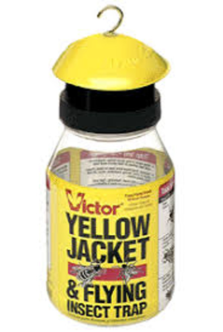 Yellow Jacket & Flying Insect Trap