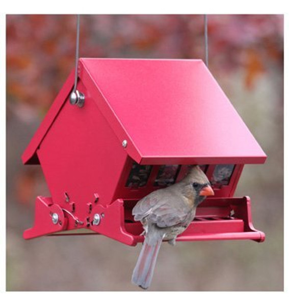 Mini Absolute II Squirrel Proof Hopper Bird Feeder