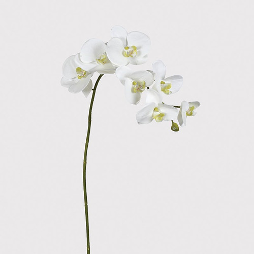 a realistic faux flower stem a White Orchid stem off white