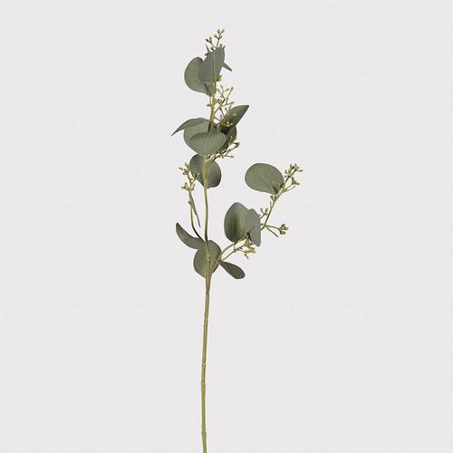 single stem natural eucalyptus spray with seed heads