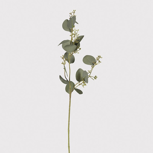 single stem natural eucalyptus spray with seed heads