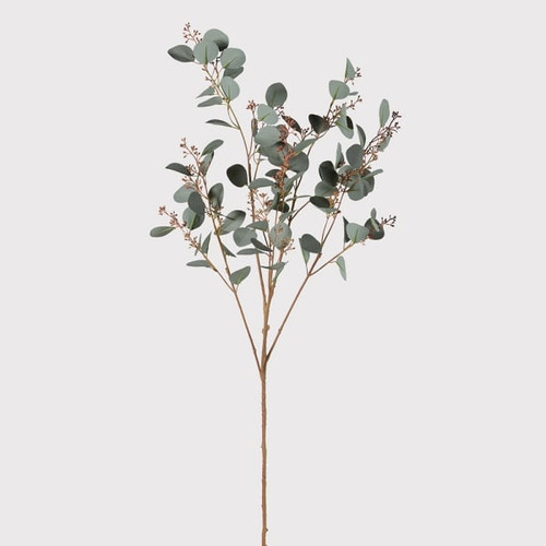 A natural silver eucalyptus spray with seed heads