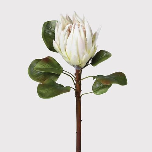king white protea stem