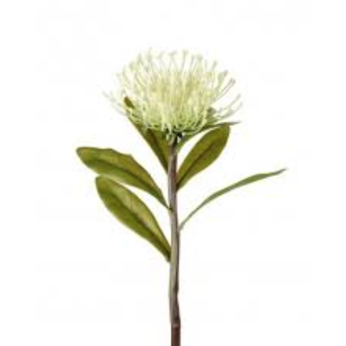 Short White Protea Spray