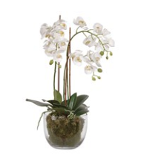 White Orchid Phalaenopsis With Moss In Glass Bowl