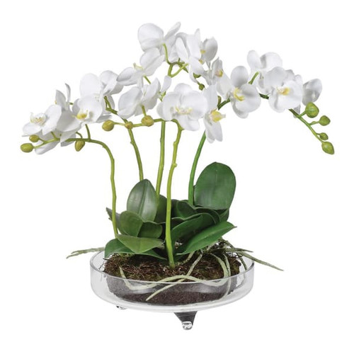 small white planted orchid in a pretty and delicate shallow glass bowl with feet