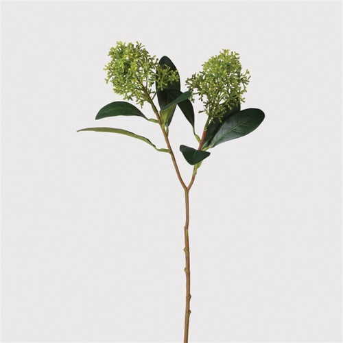 realistic early flowering skimmia