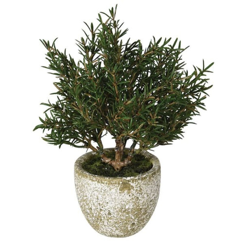 A realistic faux rosemary bush in clay pot.