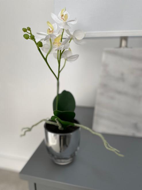 white mini orchid in mirrored pot
