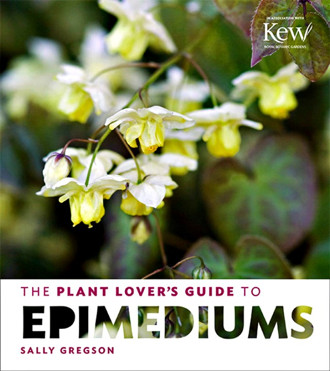 The Plant Lovers Guide To Epimediums New Hampshire Hostas
