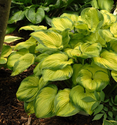 Ground Cover Plants Perennial