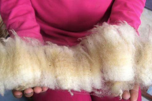 Wool - Raw