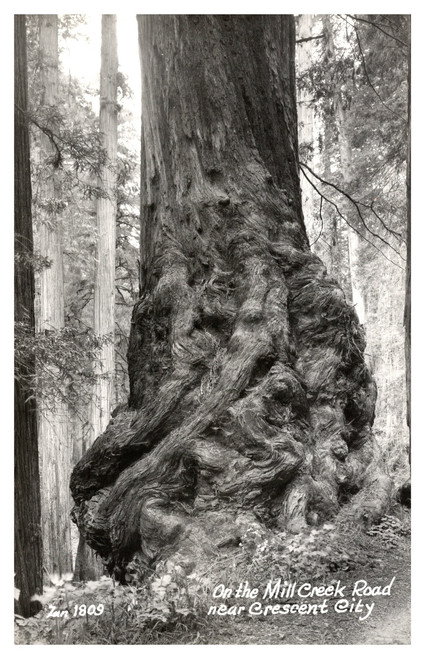 California Redwood ,Mill Creek Road