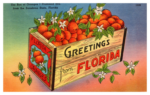 Greetings from Florida Box of Oranges I Promised