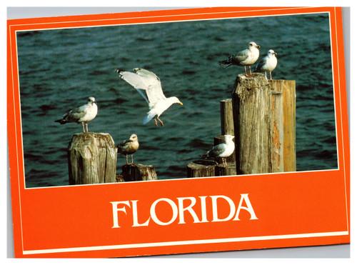 Florida seagulls