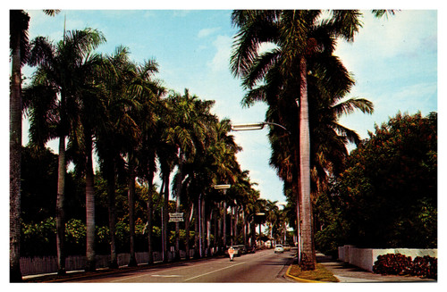 Avenue of Palms