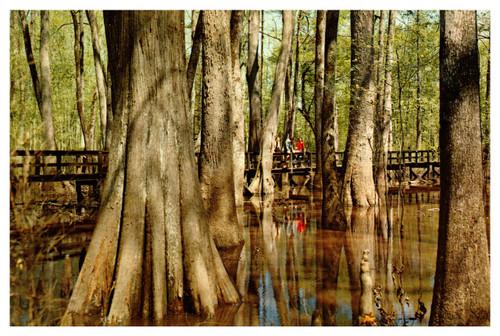 Natchez Trace Parkway Cypress Swamp