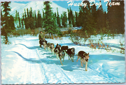 Husky sled dog team