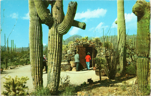 Sonora Desert Museum